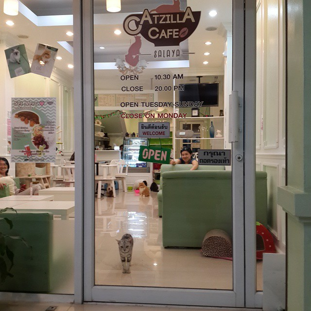 Greeted at the door by a #cat at Catzilla #cafe #cats