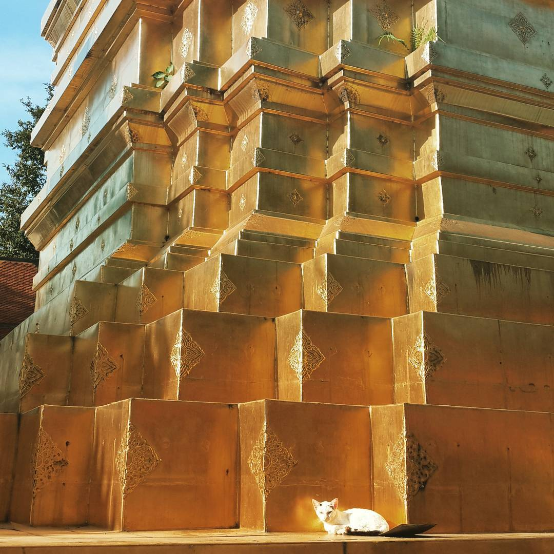 Little #cat resting at the base of a golden chedi #caturday #catstagram #catsofinstagram #instacat