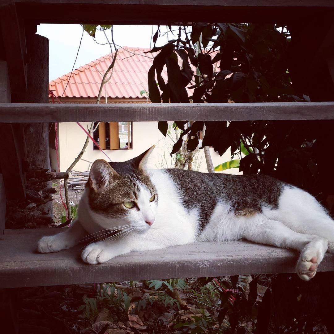 🐱 #catstagram #caturday #catsofinstagram #instacat #cats