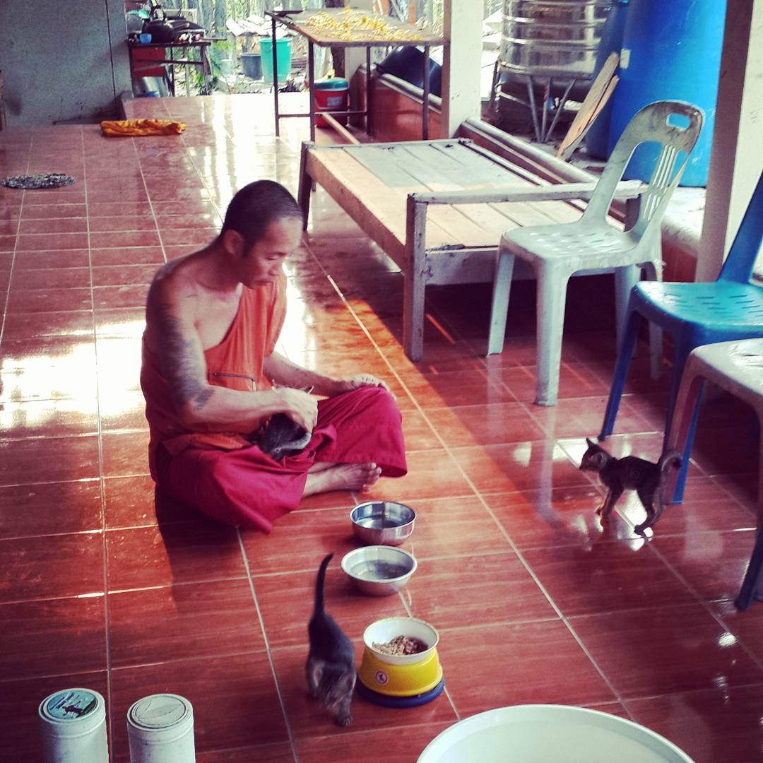 #Buddhist monk agrees to take 4 homeless #kittens #catrescue #cat