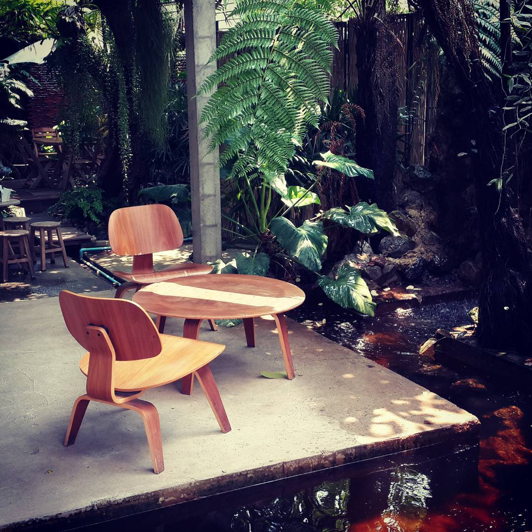 """The Forrest"" #Cafe"