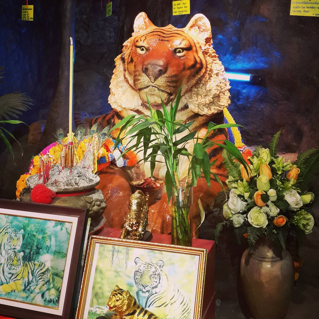 #Tiger God #animallovers #buddhism