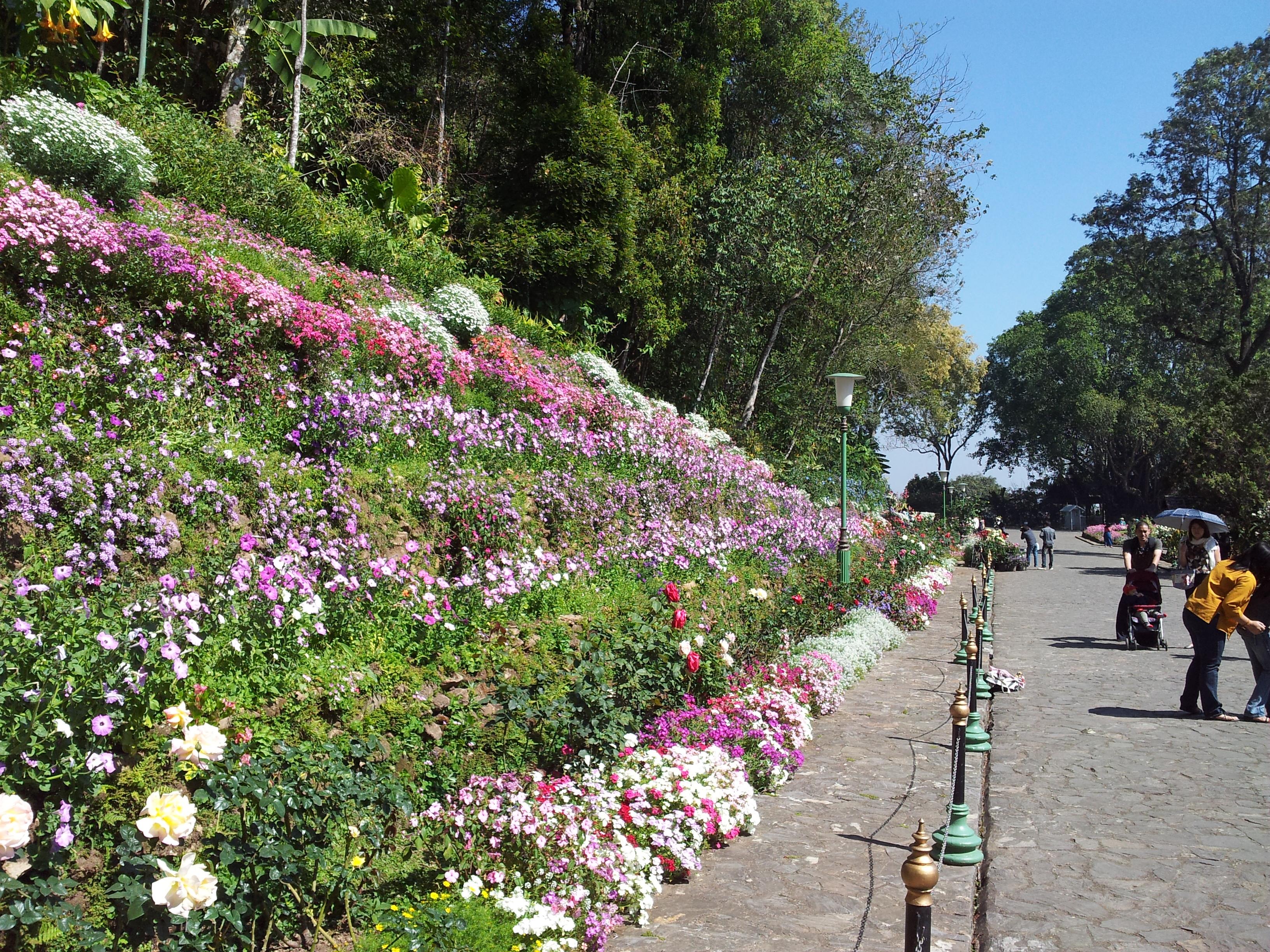Gardens at Bhuping Palace